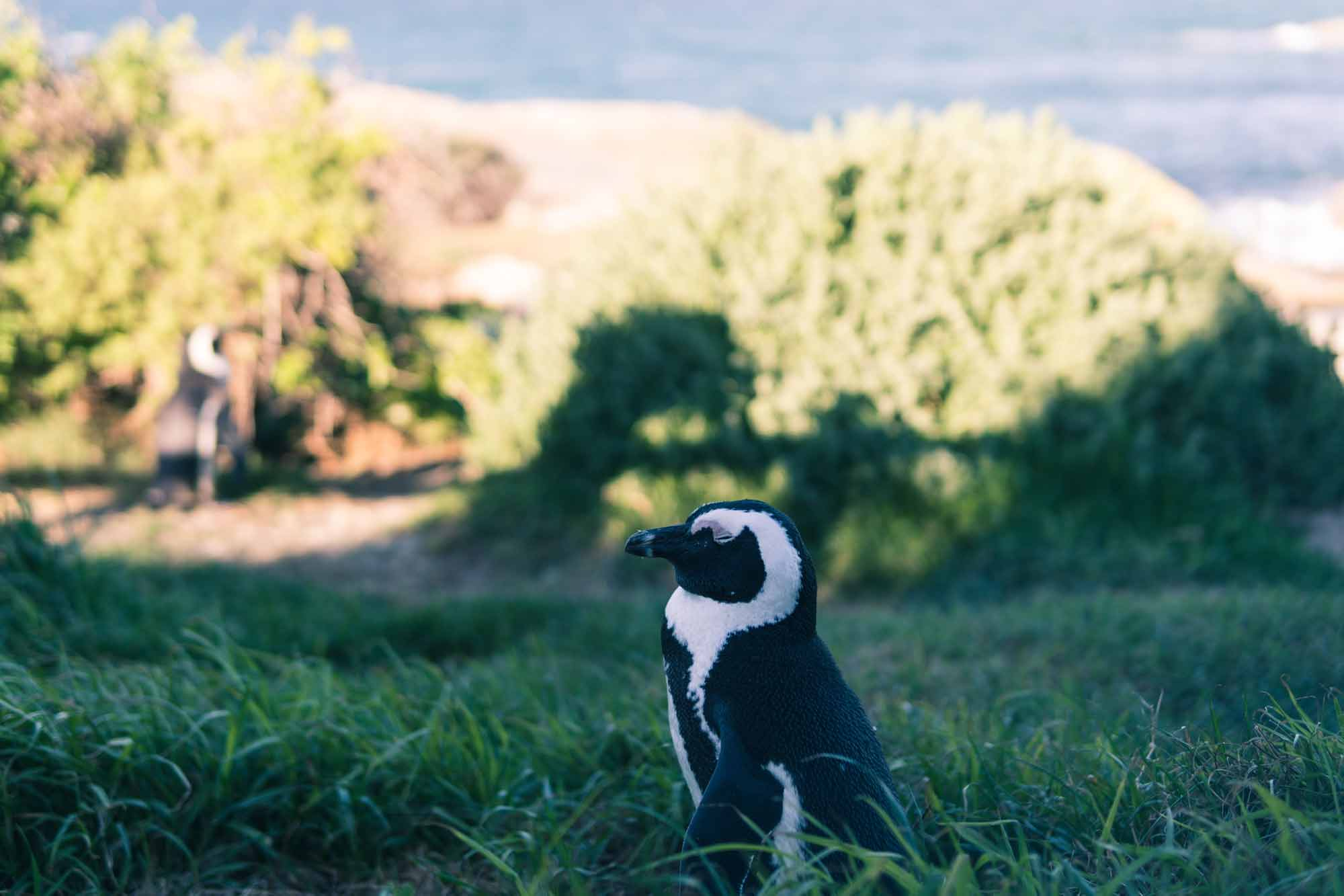 Penguin 4.0 —  Rolled Into Core Google Algorithm